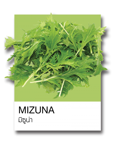 http://www.ohkajhuorganic.com/wp-content/uploads/2017/12/veg-111-420x500.png